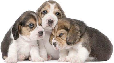 трое щенков сидят рядом