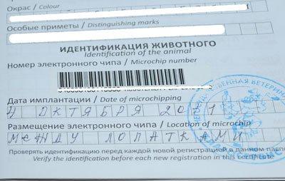 образец заполнения ветеринарного паспорта собаки