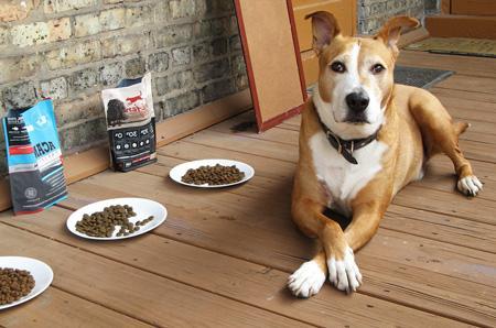 перевести собаку на сухой корм