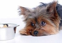 Собака плохо ест сухой корм что делать