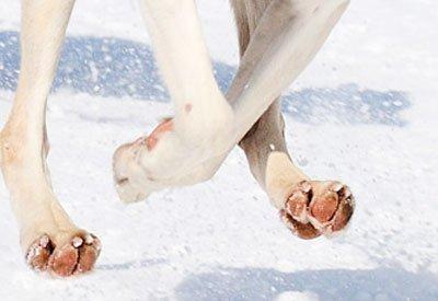 Картинки по запросу собачьи лапы зимой