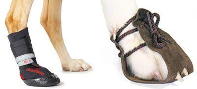 Ботинки для собак купить Цены на ботиночки для собаки