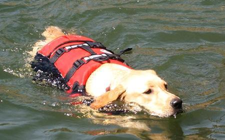 фото собака плывёт