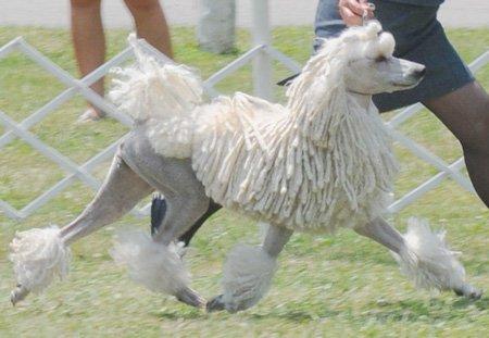 Кожные у собаки