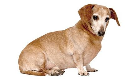 Как сбросит 50 кг веса