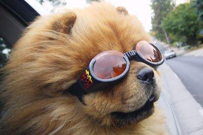 в очках фото собака