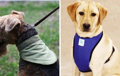 собаки в косынке и нагруднике