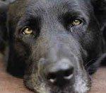 Интоксикация у собаки симптомы