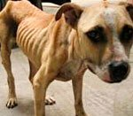 истощённый пёс в ветеринарной клинике