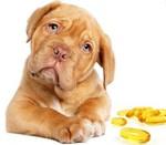 рыбий жир для собак фото