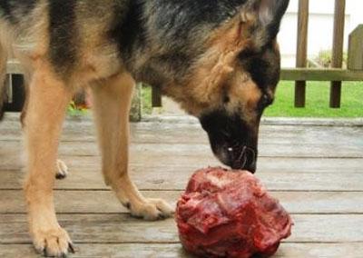 овчарка ест мясо