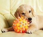 рельефный мячик для щенка