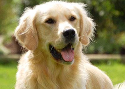 какая порода собак недорогая