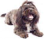 пёс с открытой пастью
